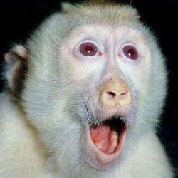 놀람 원숭이 놀라는 모습 깜짝 표정 얼굴 동물
