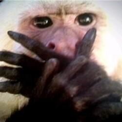 원숭이 입막고 우는 허세 눈물