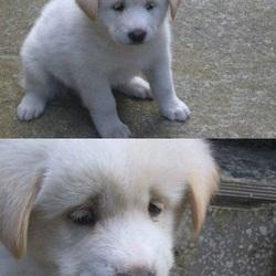 시무룩 개무룩 좌절 멘붕 표정 강아지 개 안습 우울