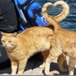 하트 고양이 냥이 사랑 동물 꼬리