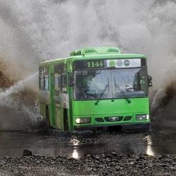 가즈아 버스 한강 달리는 물위를 질주 지옥 비트코인 주식 주갤러 투자 실패