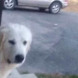개싫음 싫어 싫다 강아지 움짤 냄새 저리치워 극혐 혐오