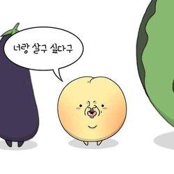 고백 사랑 너랑 살구 싶다구 과일 가지 참외 수박