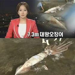 대왕오징어 오징어 큰오징어 못생김 못생긴 너희들 왕오징어 뉴스